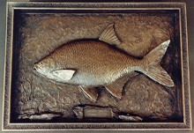 Bronze high relief sculpture of Bronze Bream fish